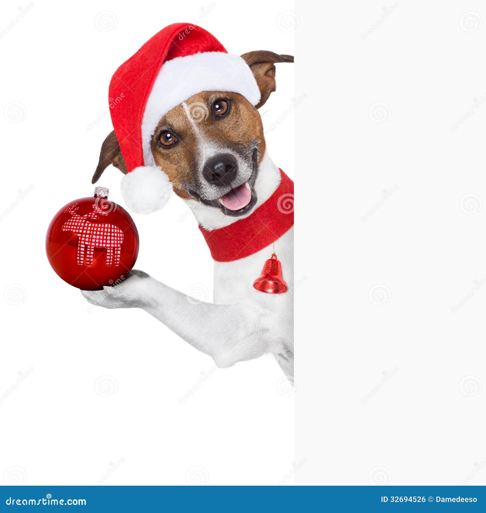 Hallo Auf Wiedersehen Weihnachtshund Stockfoto - Bild von geschenk ...