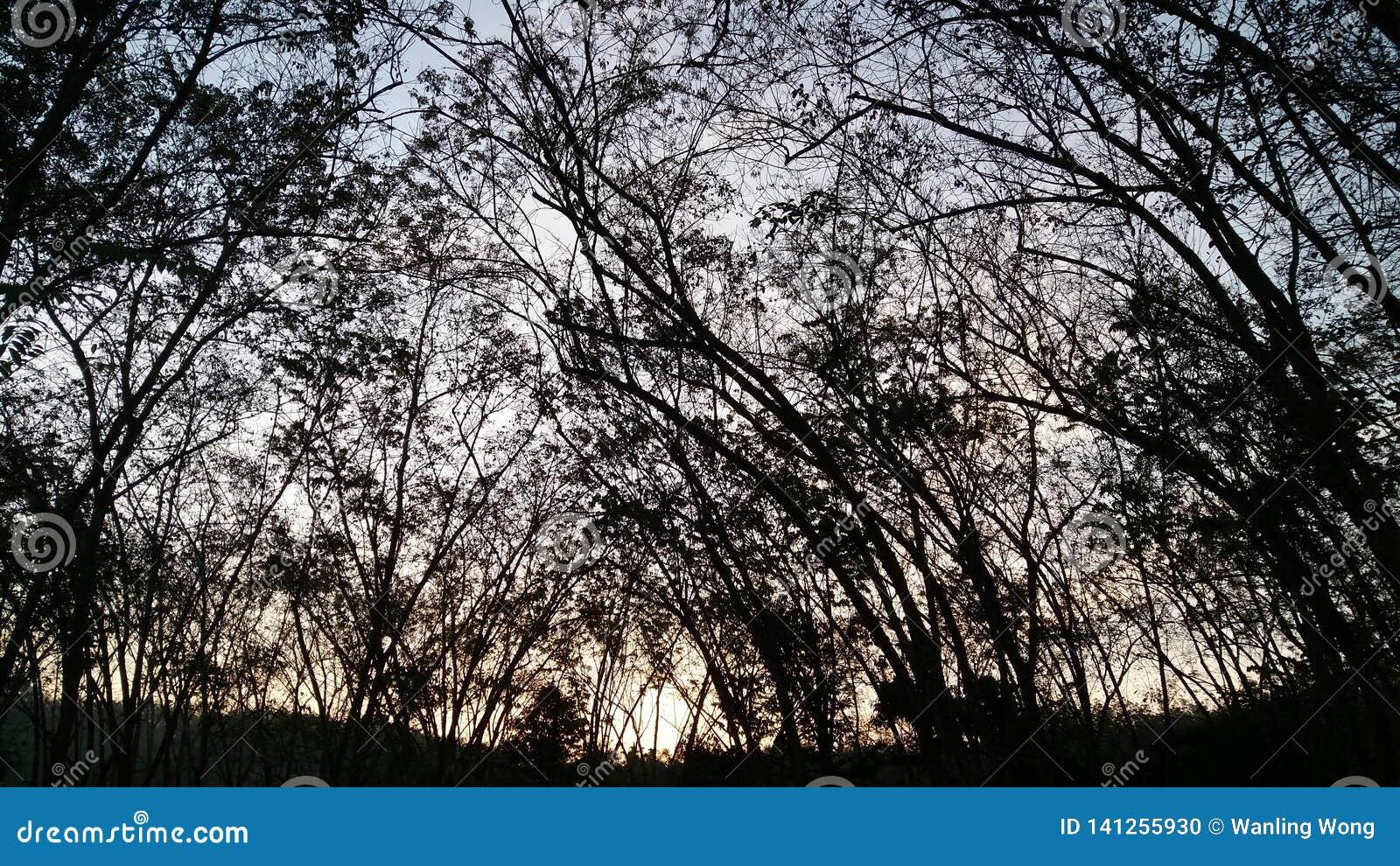 Hallo ochtend rubberlandbouwbedrijf