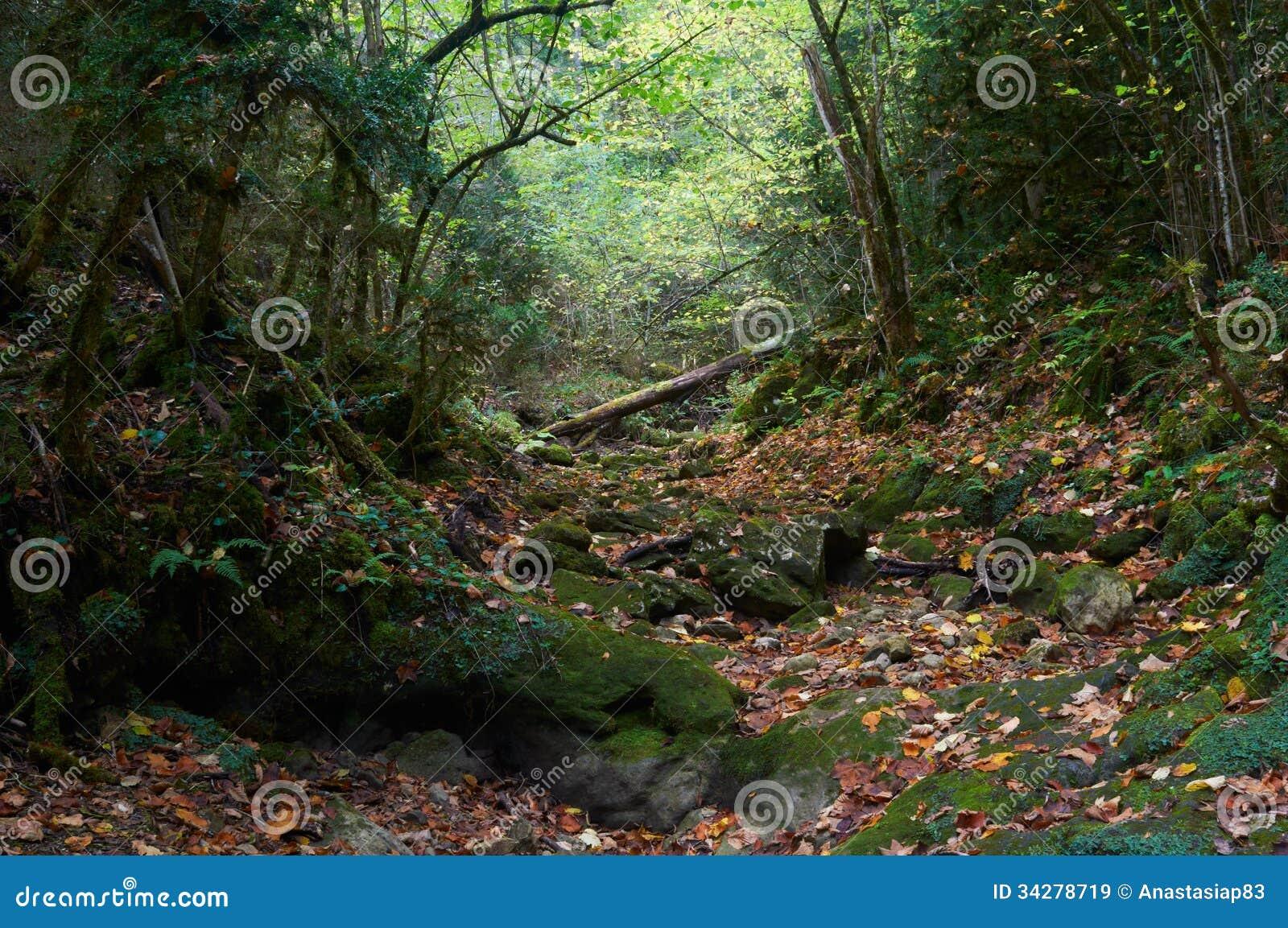 Halloween autumn mossy forest