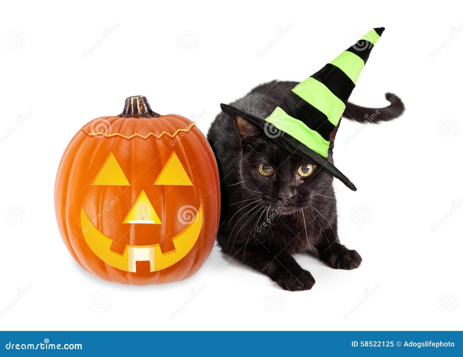 Cat In The Hat Jack O Lantern
