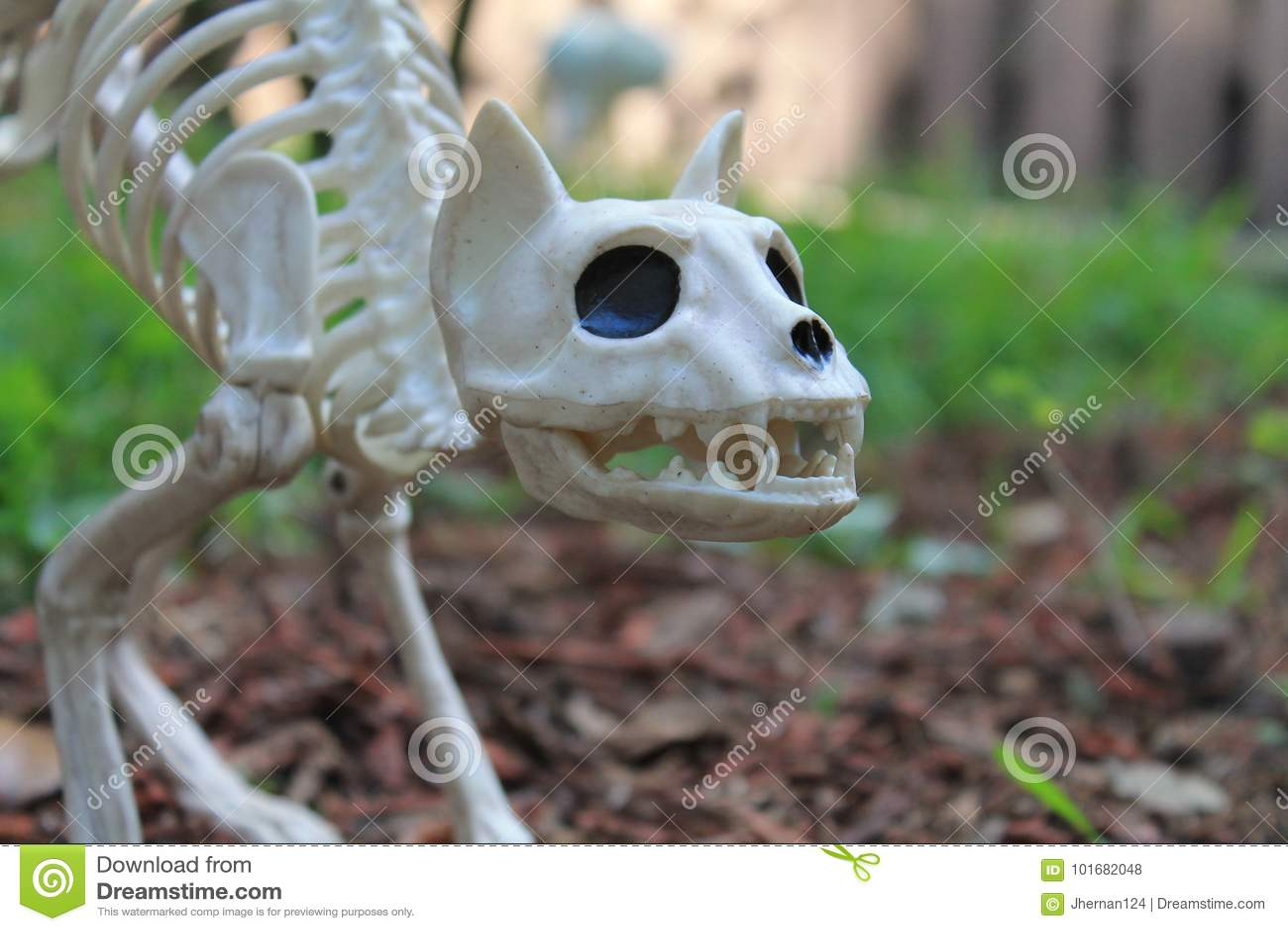 Halloween de decoratie van het kattenskelet stock foto