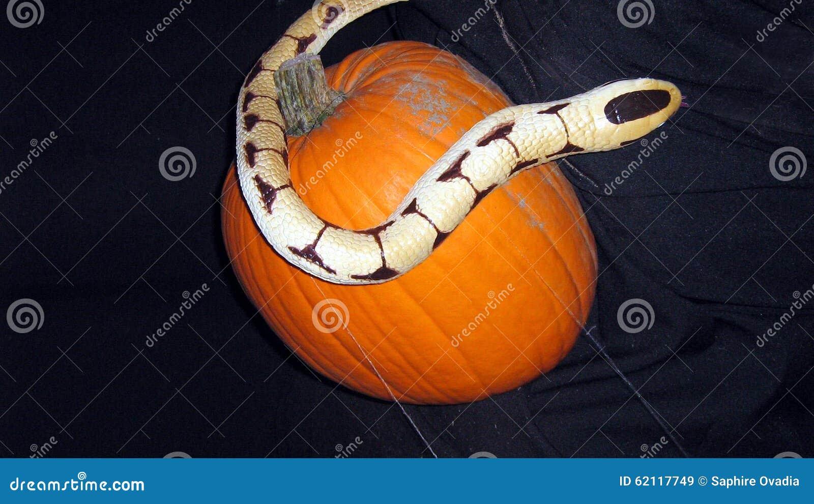 Halloween decoratie van een slang en een pompoen stock afbeelding afbeelding 62117749 - Decoratie van een terras ...