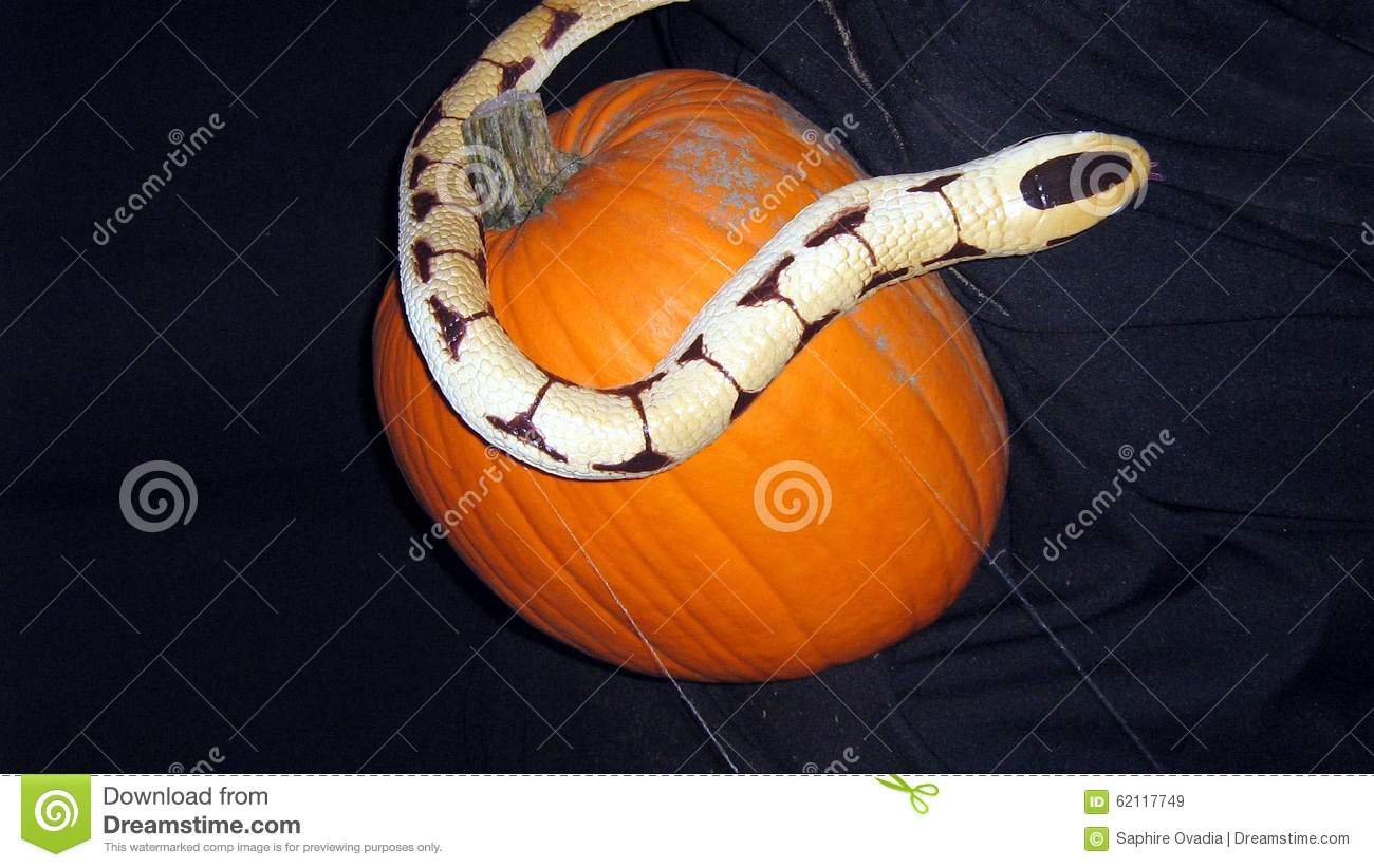 Halloween Decoration Of A Snake And Pumpkin Stock Photo - Image ...