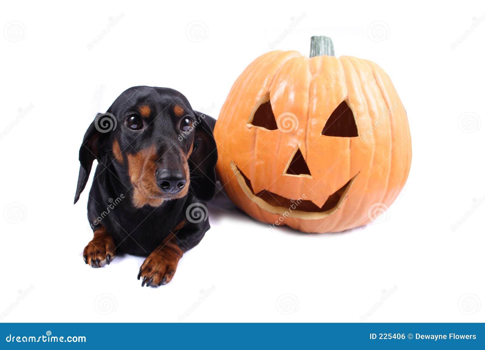 Download Halloween Dog stock photo. Image of night, treats, october - 225406