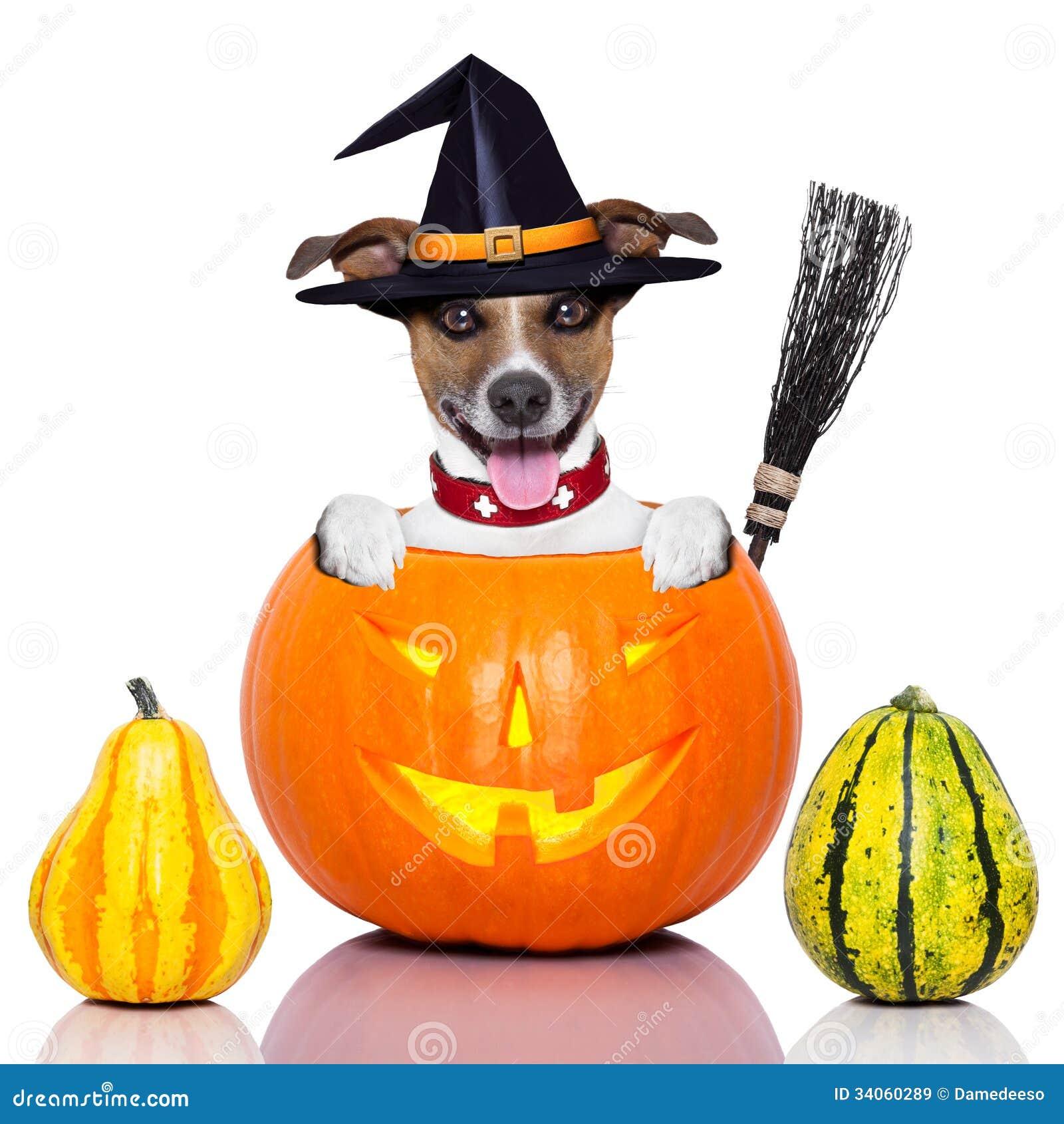 Broom Halloween