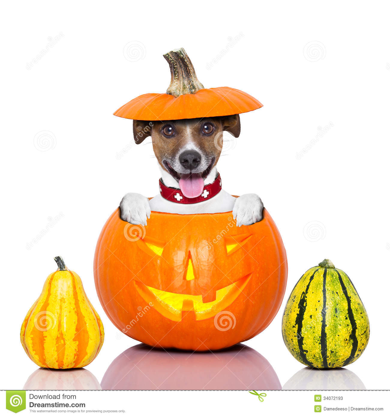 Dog Cakes With Pumpkin