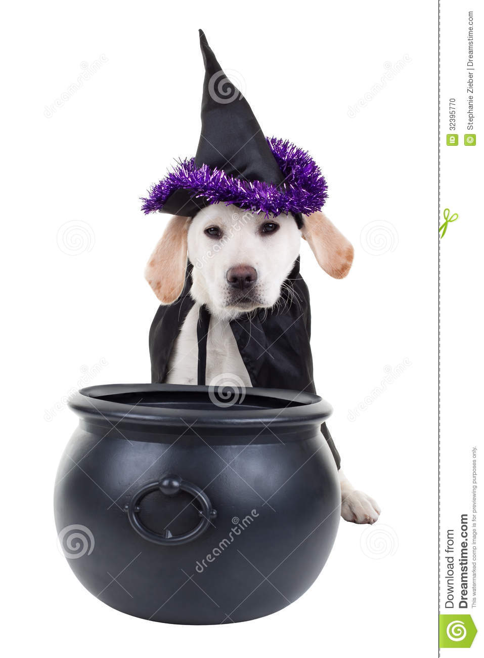 White Dog Halloween Costume
