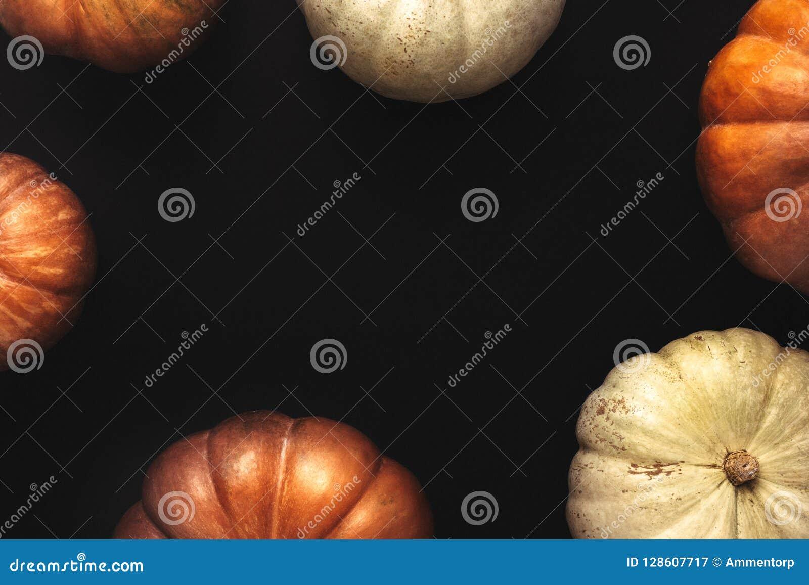 Halloween frame of orange and white pumpkins