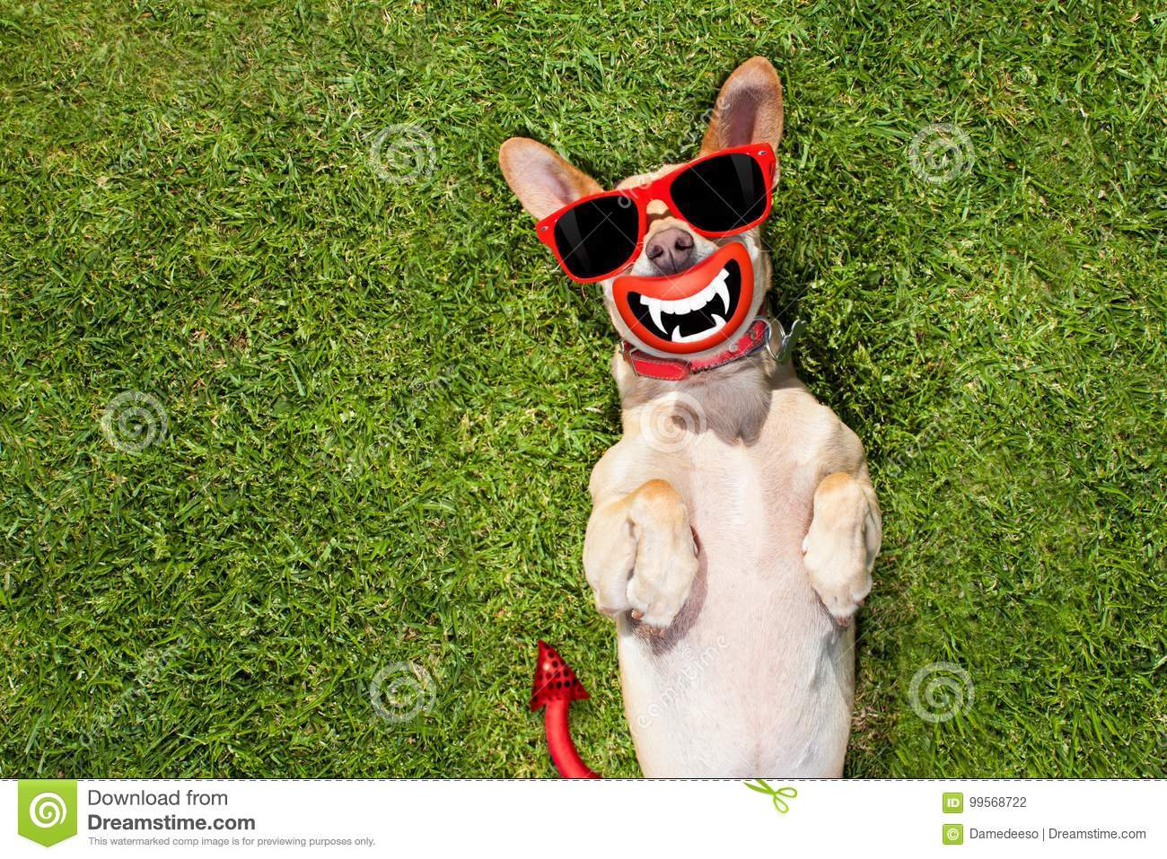 Halloween Ghost Dog Trick Or Treat Stock Photo - Image of