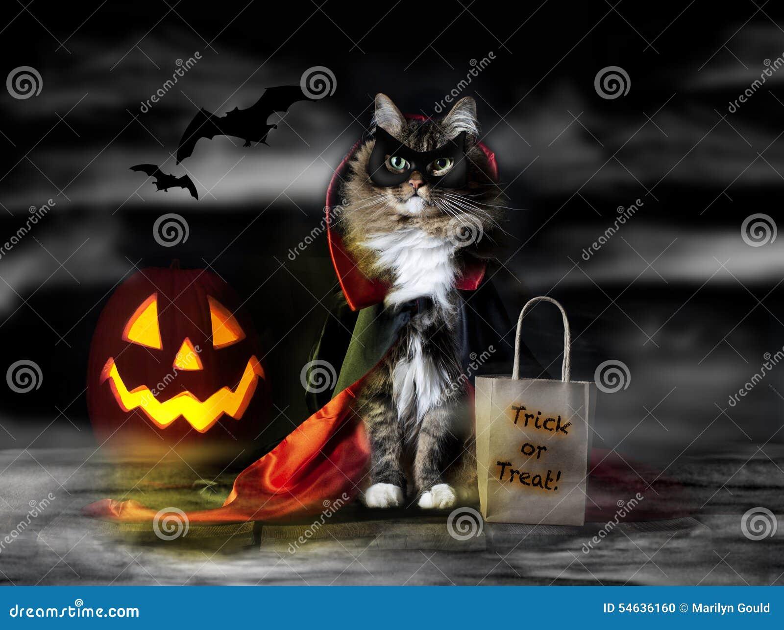 Halloween obliczenia Dracula kot