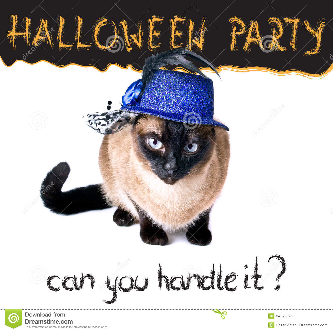 Halloween Party Banner Funny Edgy Jumpy Siamese Hilarious Cat ...