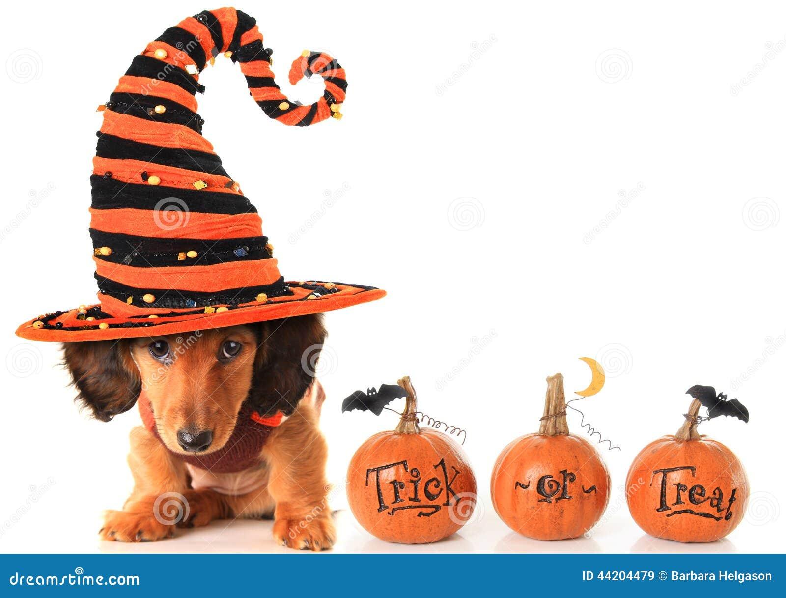 Halloween Dachshund