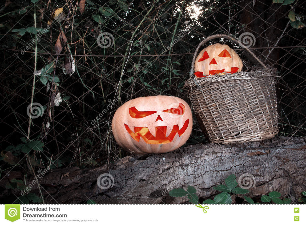 Halloween scary and funny pumpkins on a log in a basket in the d