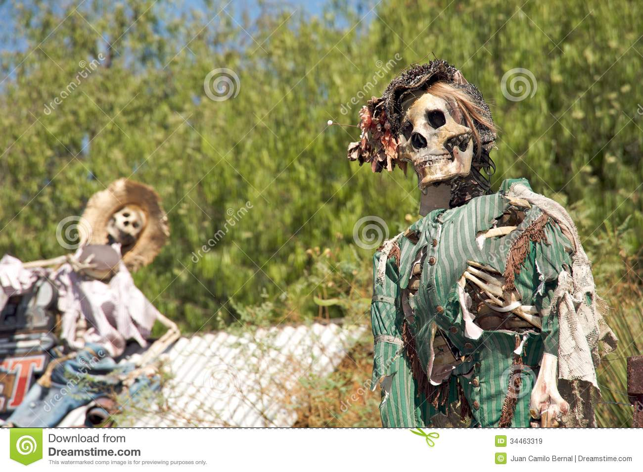 halloween skeleton royalty free stock images