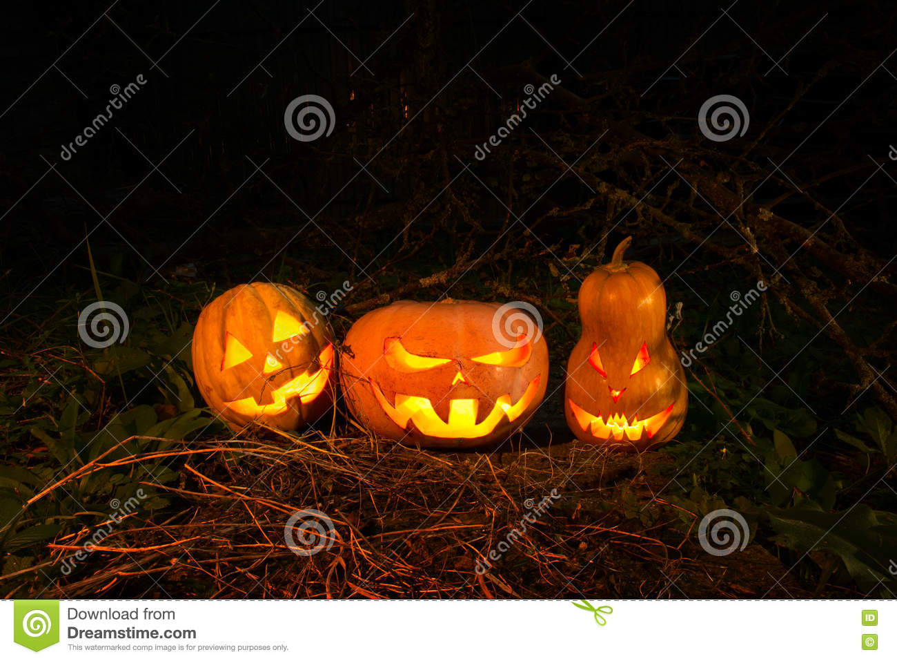 Halloween three pumpkins scary funny and creepy in the woods on