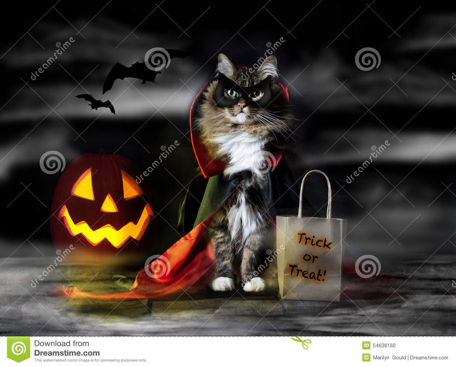Halloween-Zählungs-Dracula-Katze