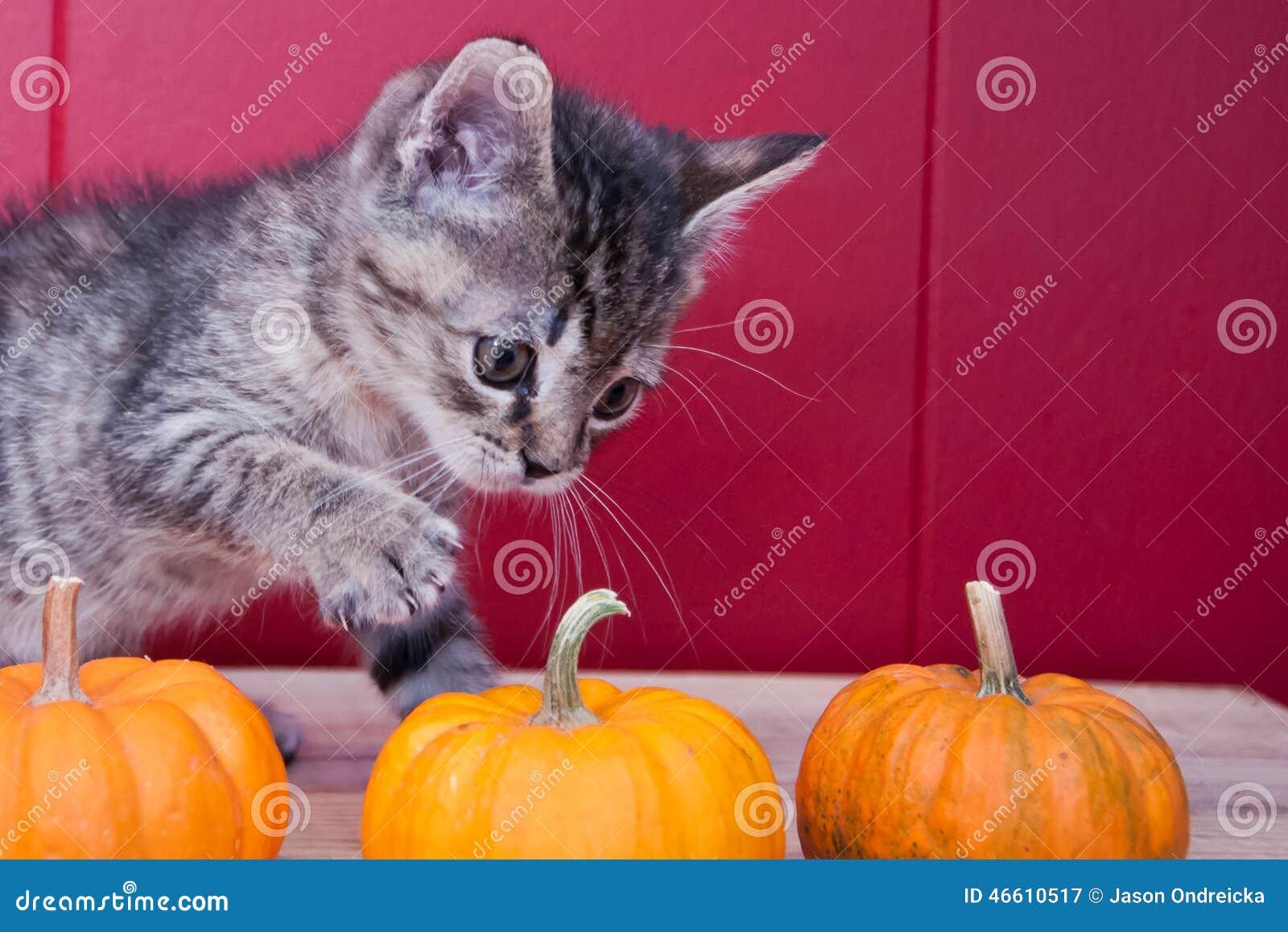 Halloweenowa figlarka
