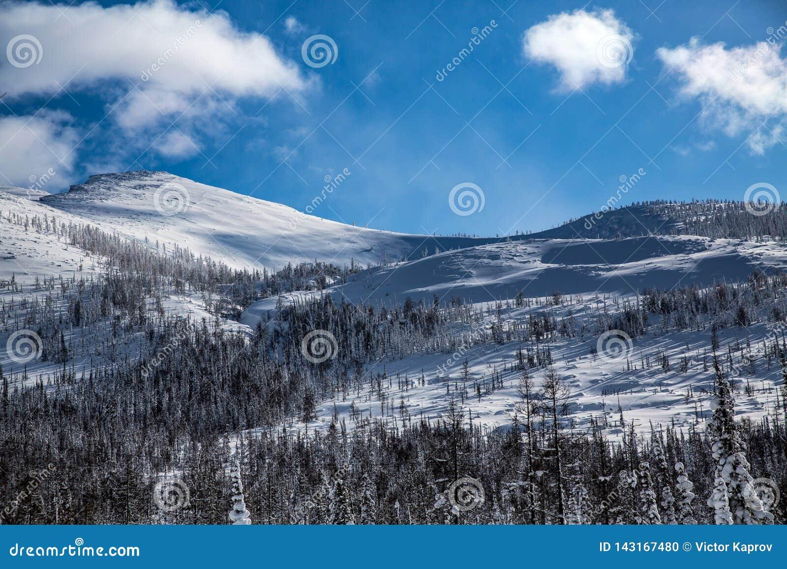 Halnego skłonu i zimy las w pogodnej pogodzie