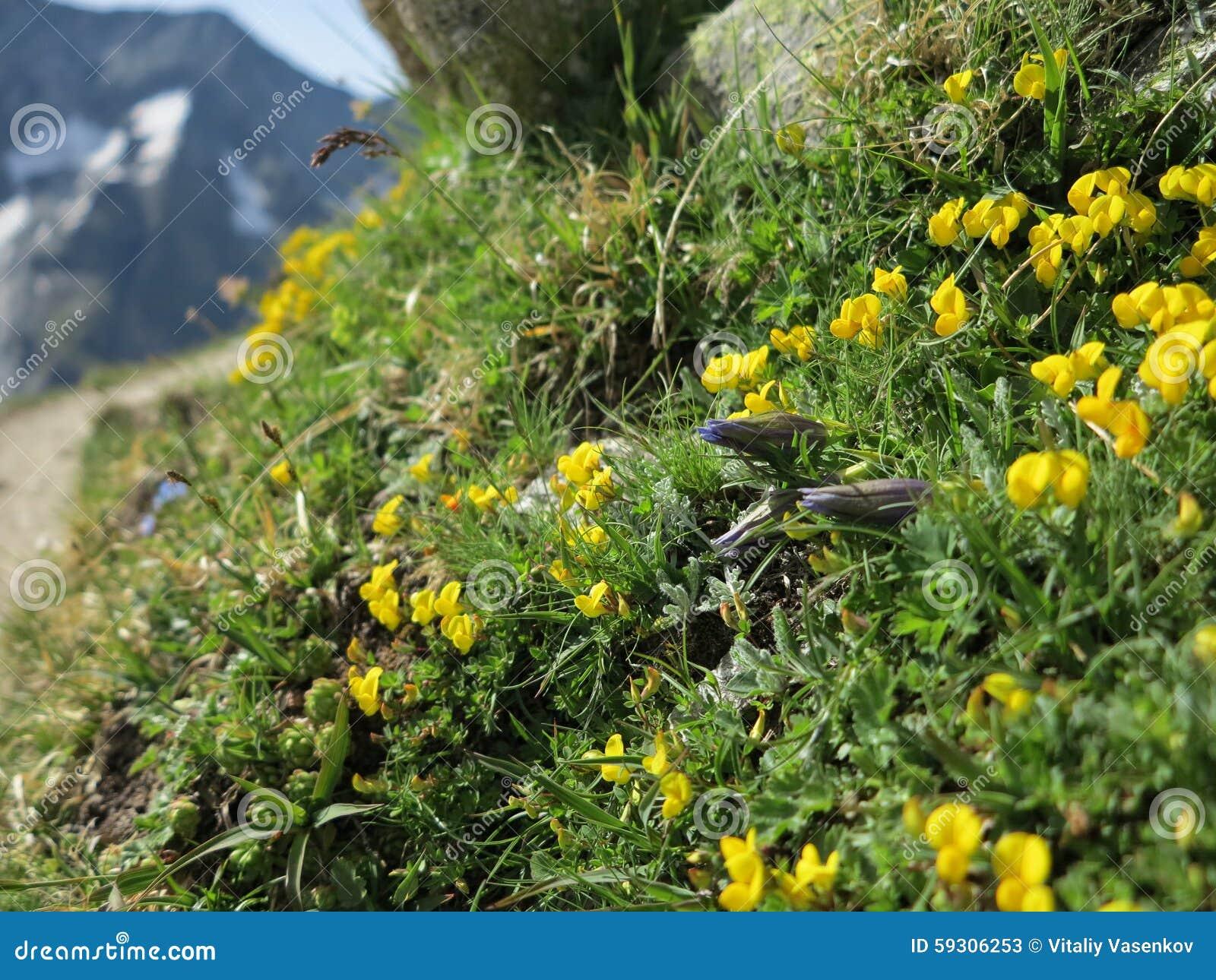 Halni Wildflowers