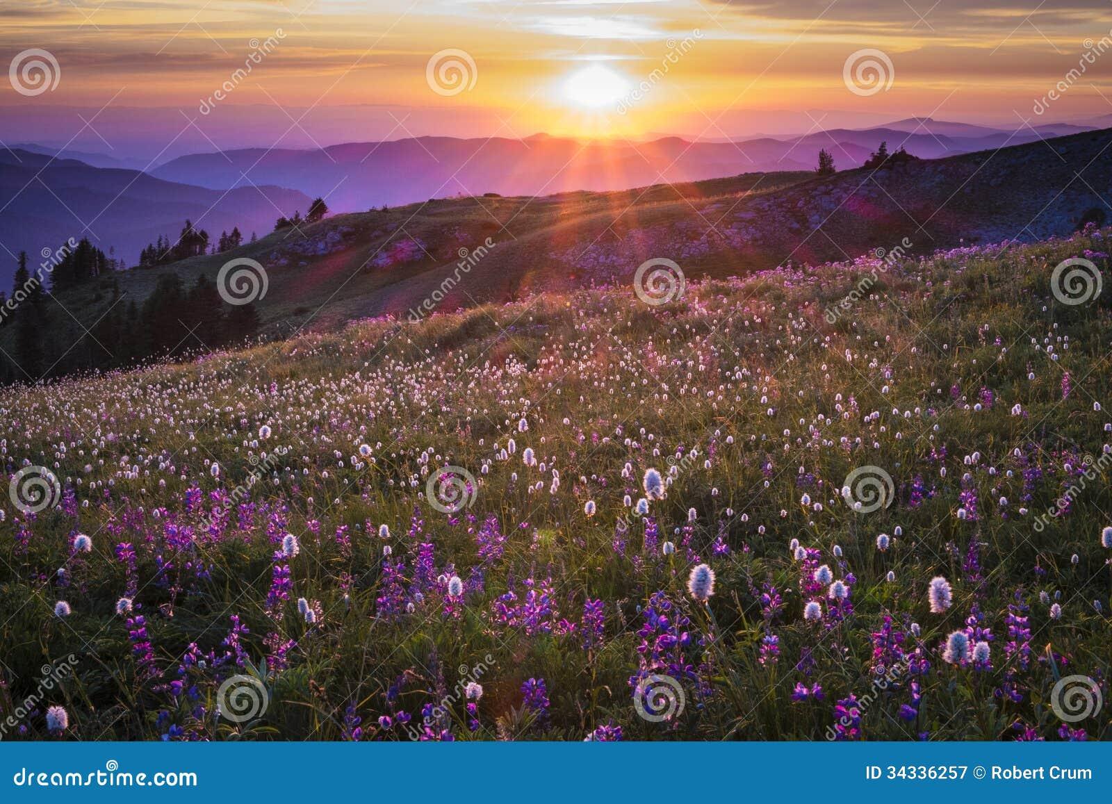 Halni wildflowers backlit zmierzchem