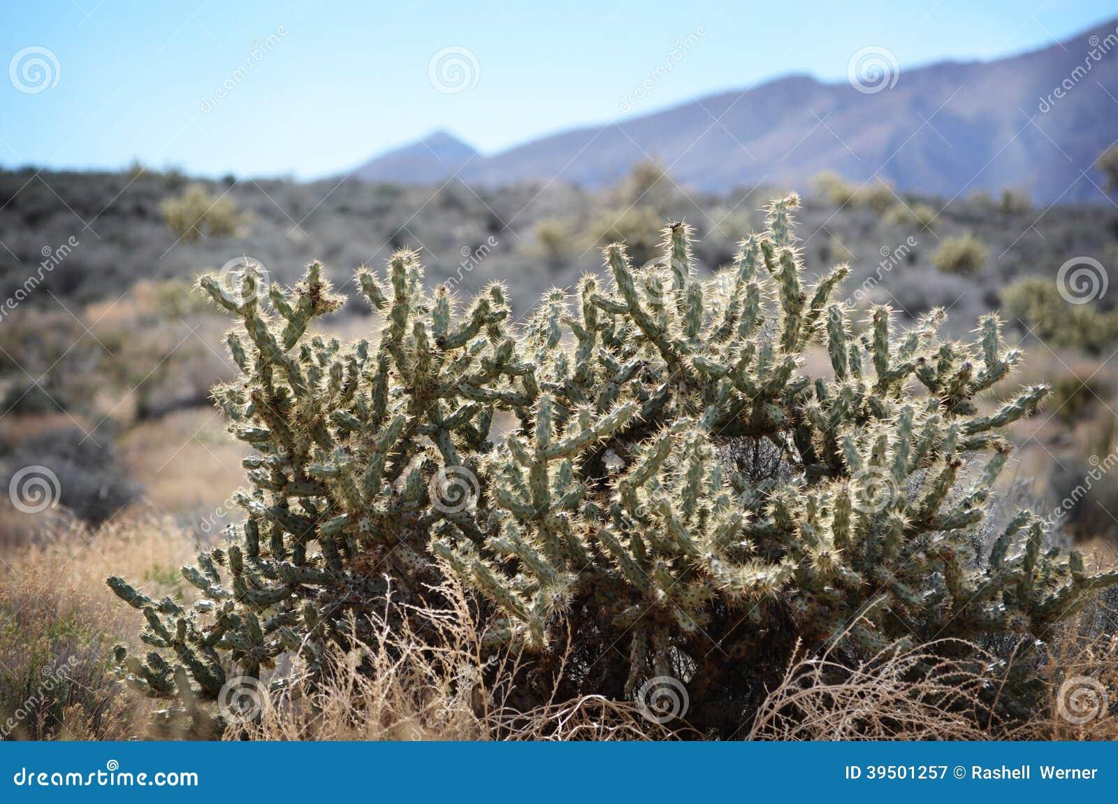 Halny kaktus