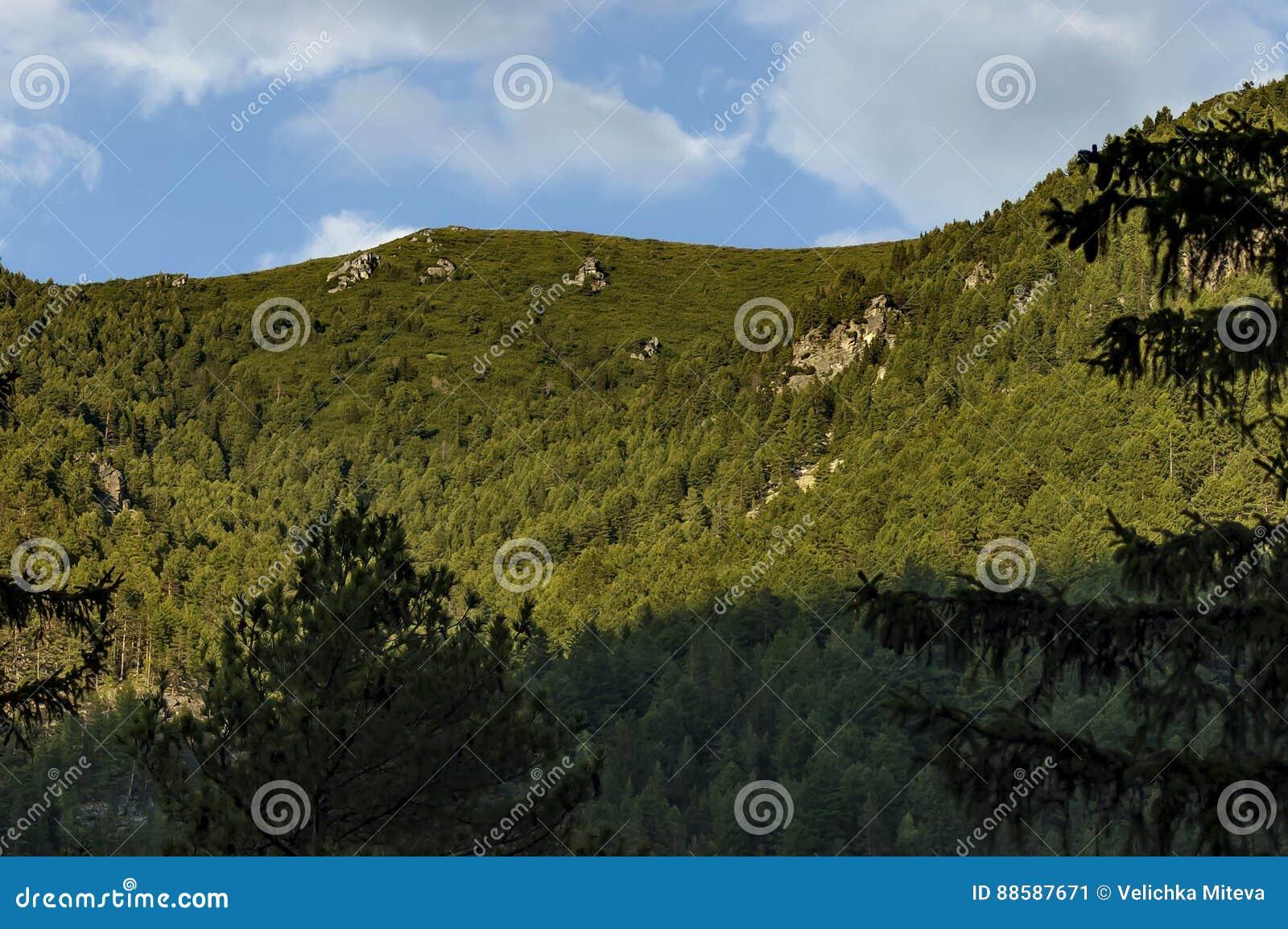 Halny odgórny przerastający z wysokimi drzewami, skałą i halizną Rila góra,