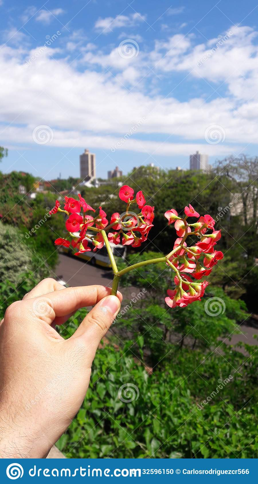 Halten einer roten Blume