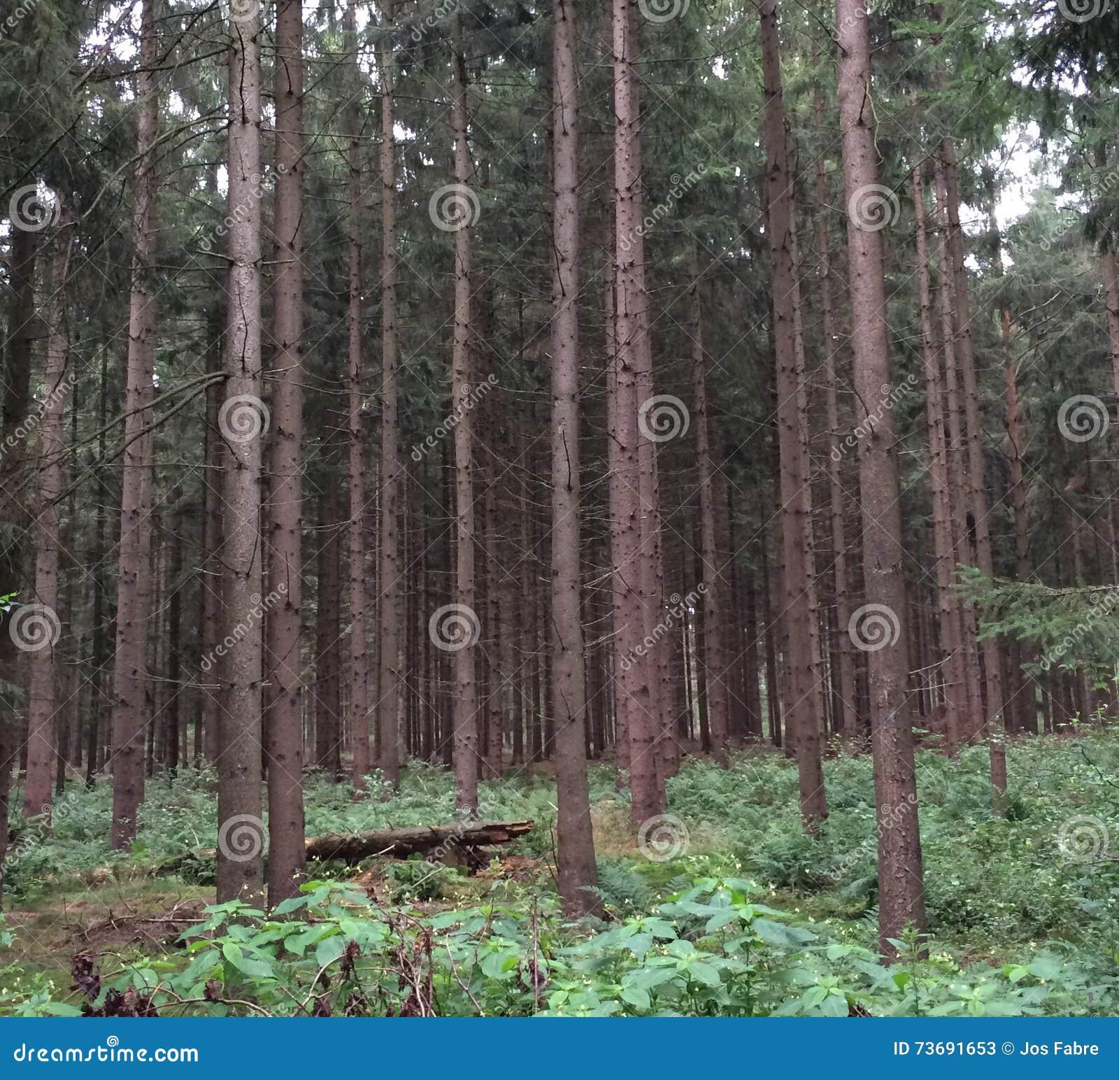 Halv öppen skog