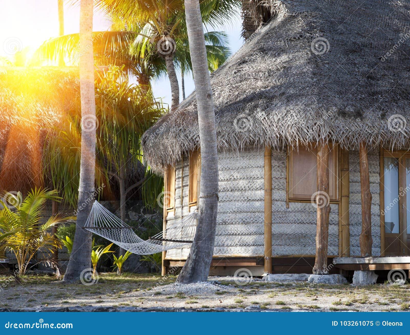 hamac entre les palmiers dans un jardin tropical et la maison wattled image stock image du. Black Bedroom Furniture Sets. Home Design Ideas