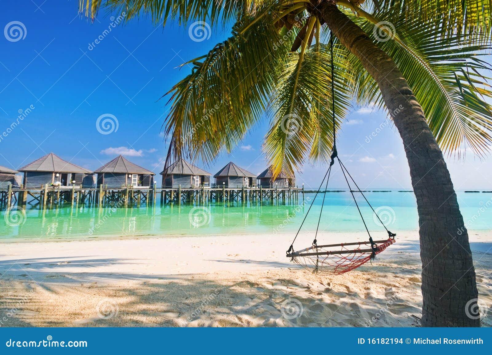 Hamaca de la playa bajo las palmeras foto de archivo for Hamaca plegable playa