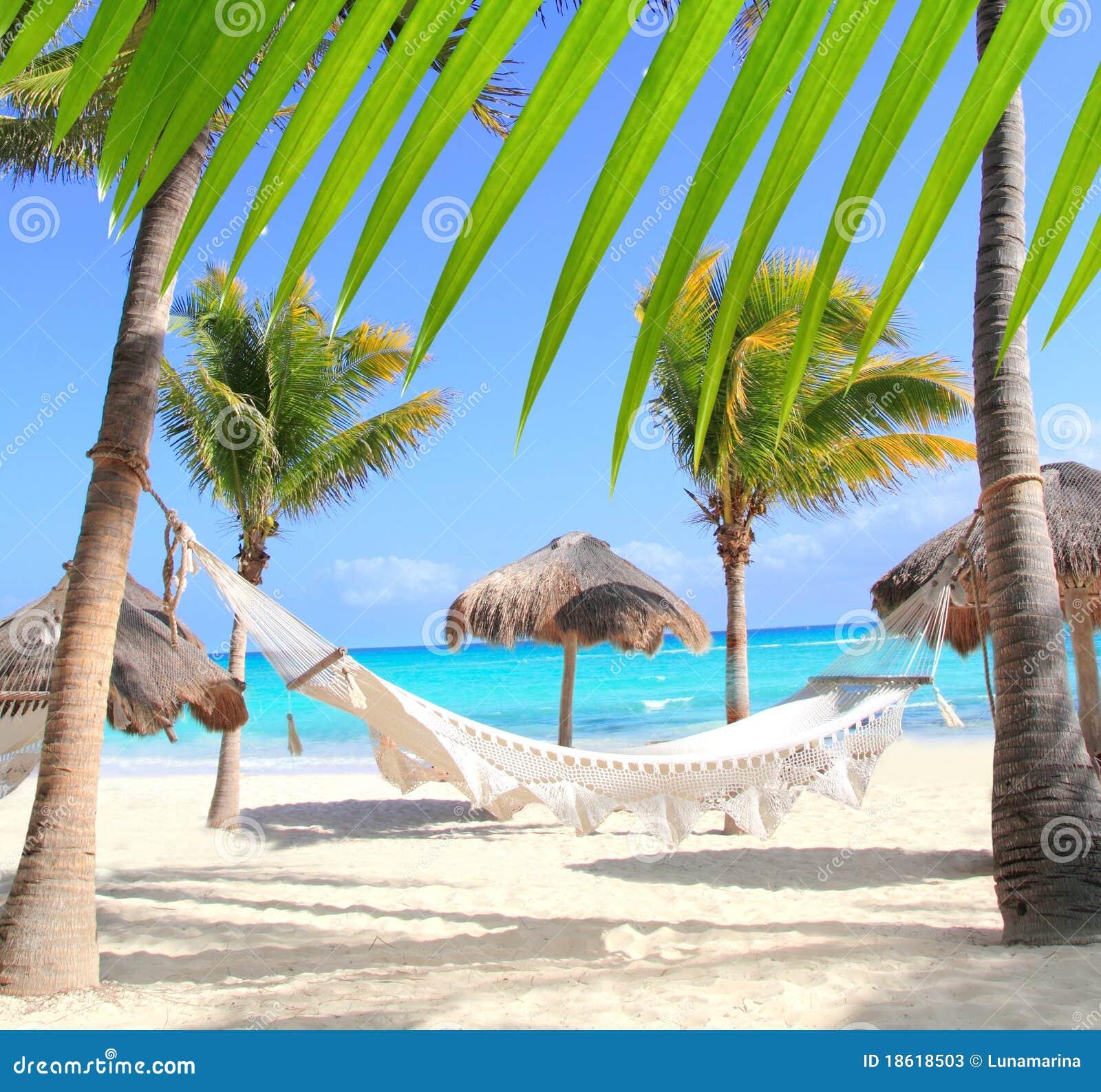 Hamaca y palmeras del caribe de la playa fotos de archivo imagen 18618503 - Fotos de hamacas en la playa ...