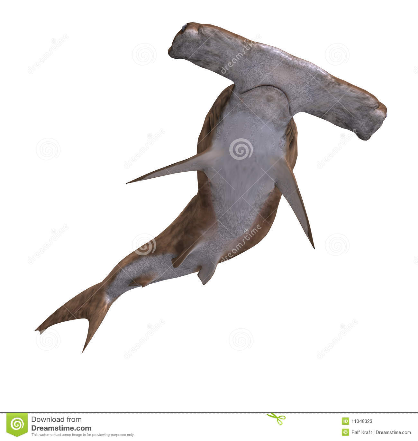 Hammerhead shark stock photos image 11048323 for Shark tank fairy door