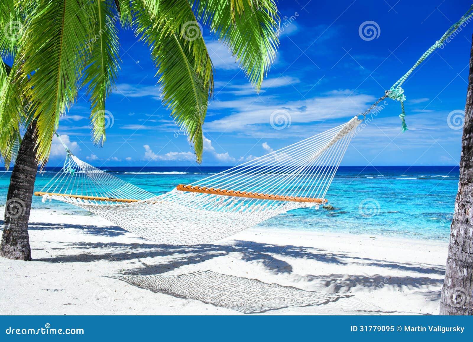 hammock between palm trees on tropical beach royalty free