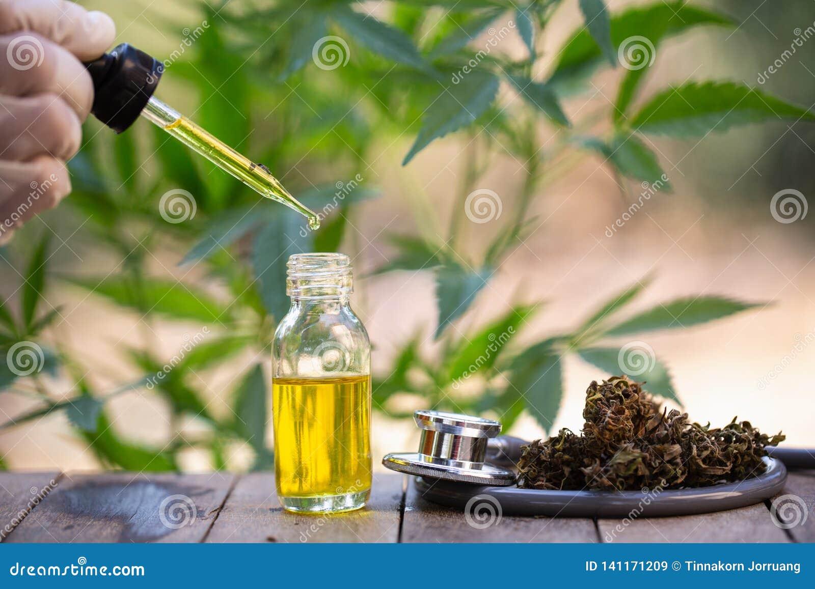 Hampaolja, medicinska marijuanaprodukter inklusive cannabisbladet, torkad knopp-, cbd- och pölsaolja över svart träbakgrund