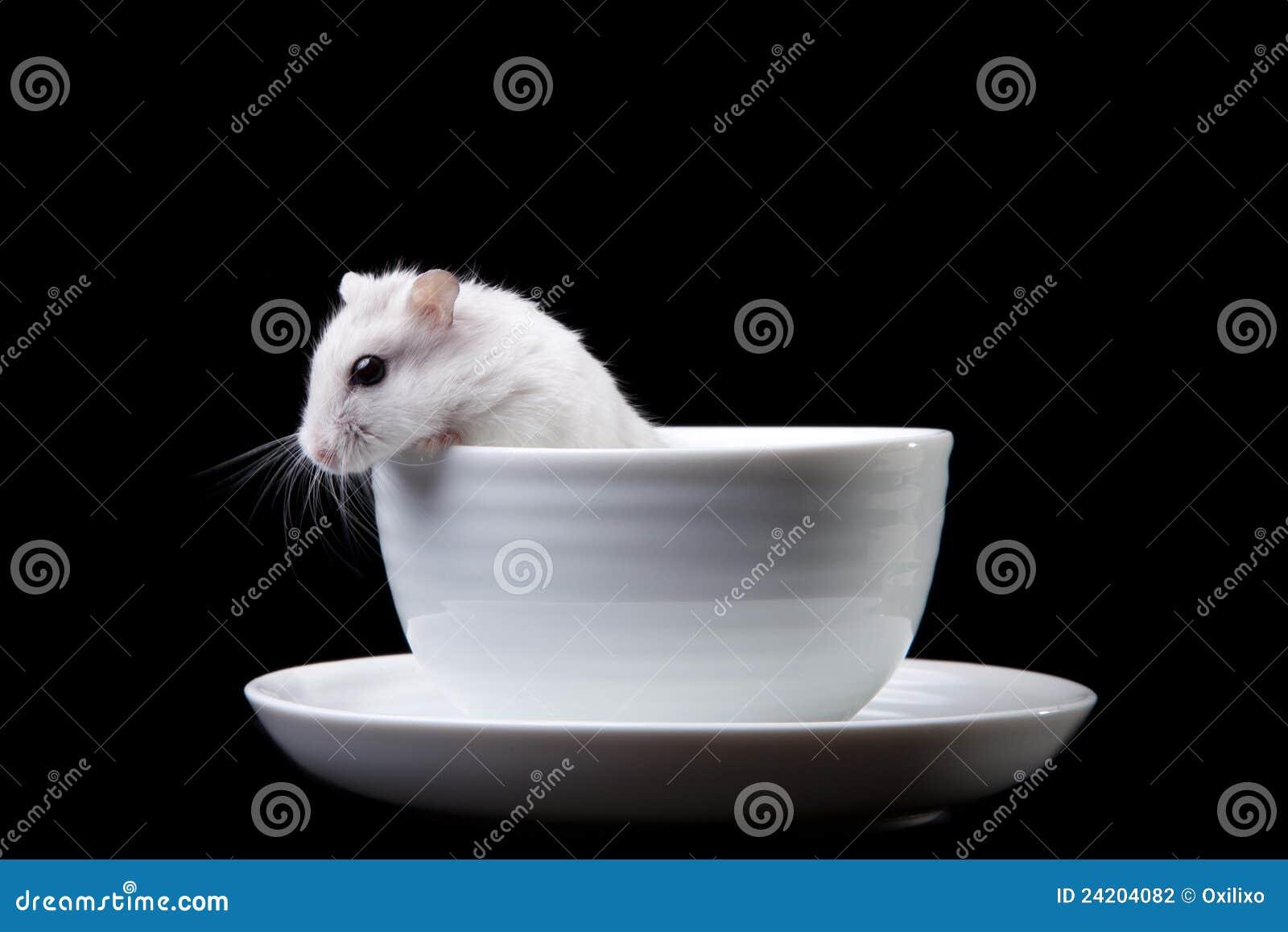 Hamster blanc dans la cuvette sur le noir