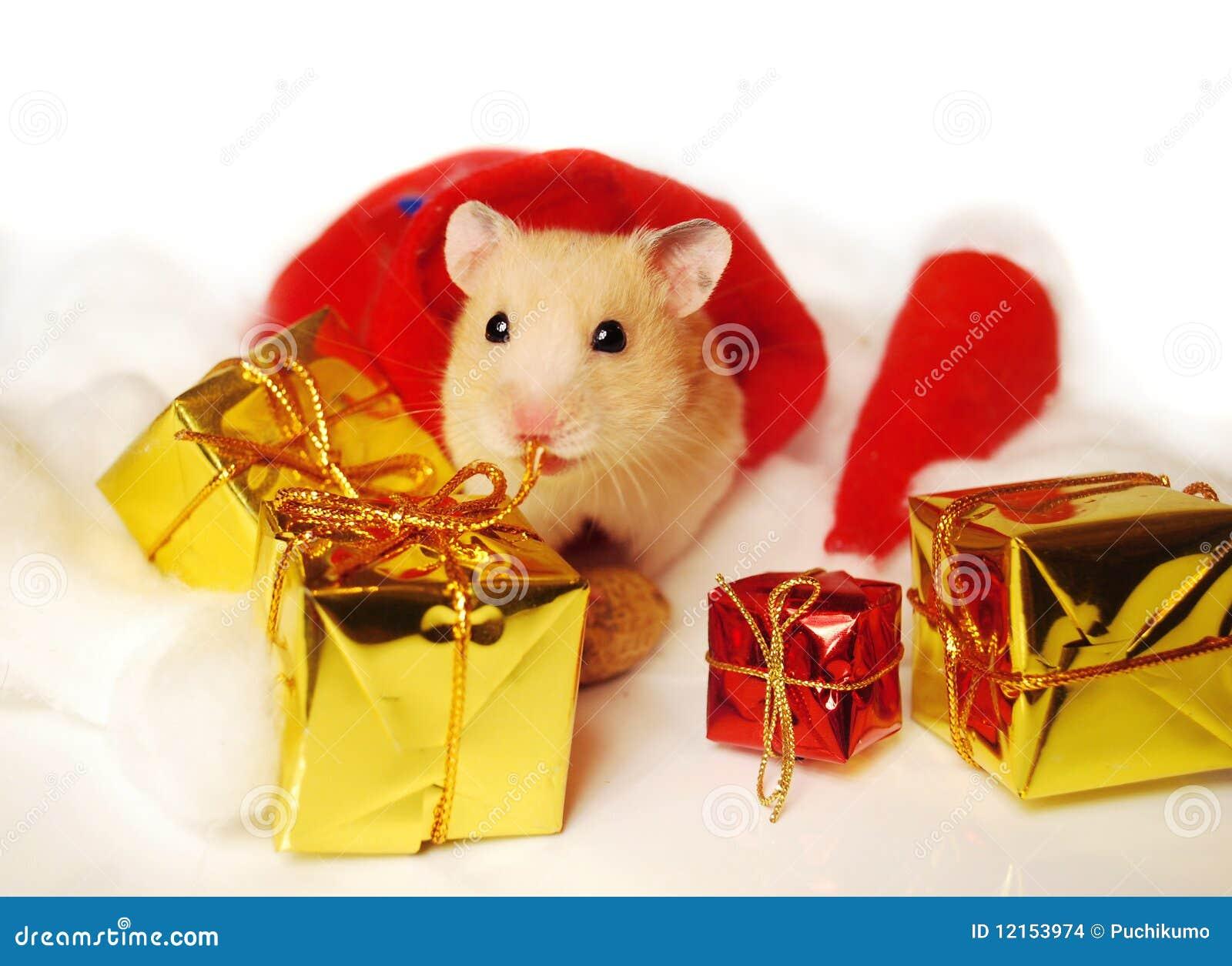 Hamster christmas gifts