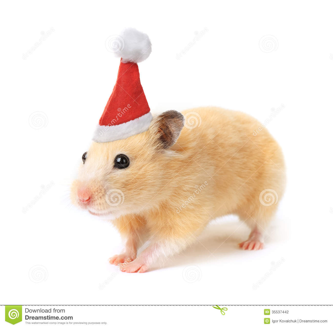 Christmas hamster isolated on white background