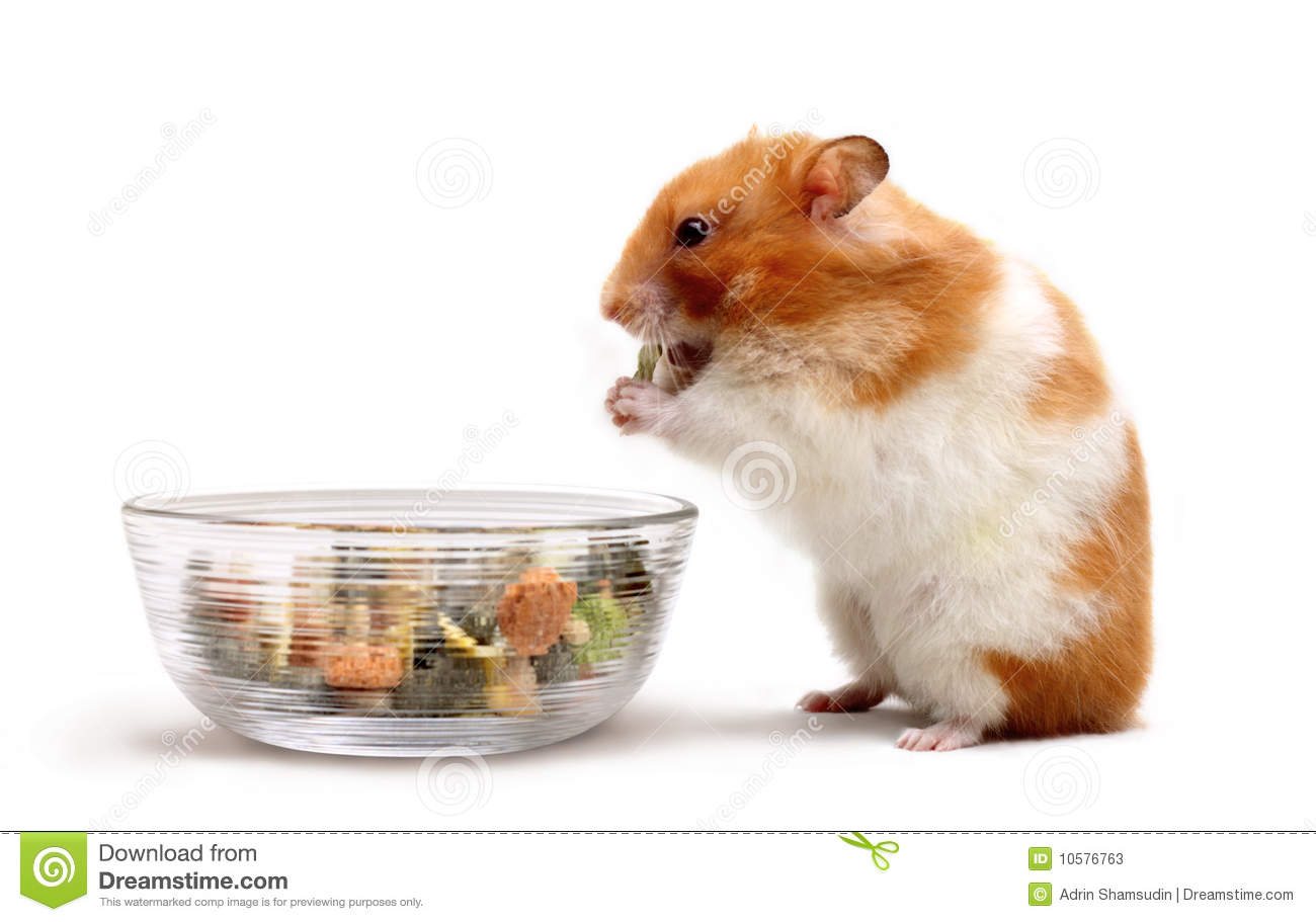 Can A Cat Eat A Hamster