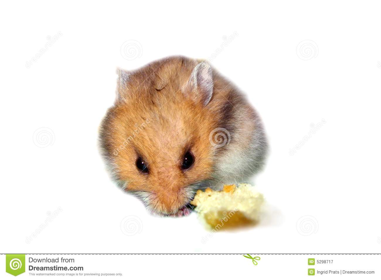 Diet for Jungar hamsters