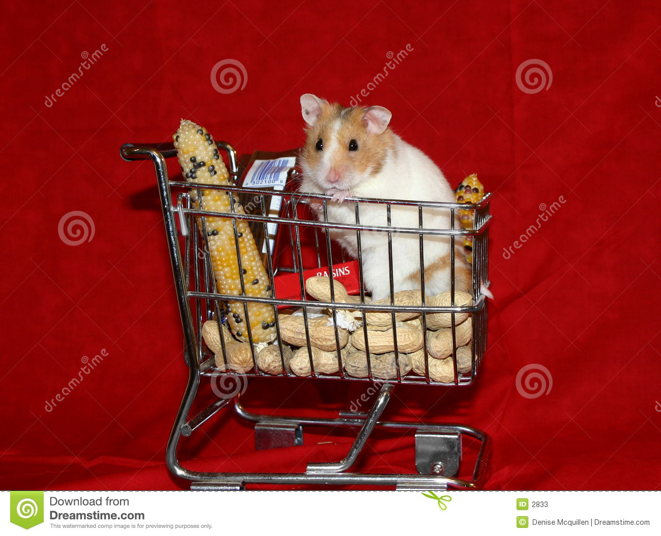 Hamster goes shopping 1