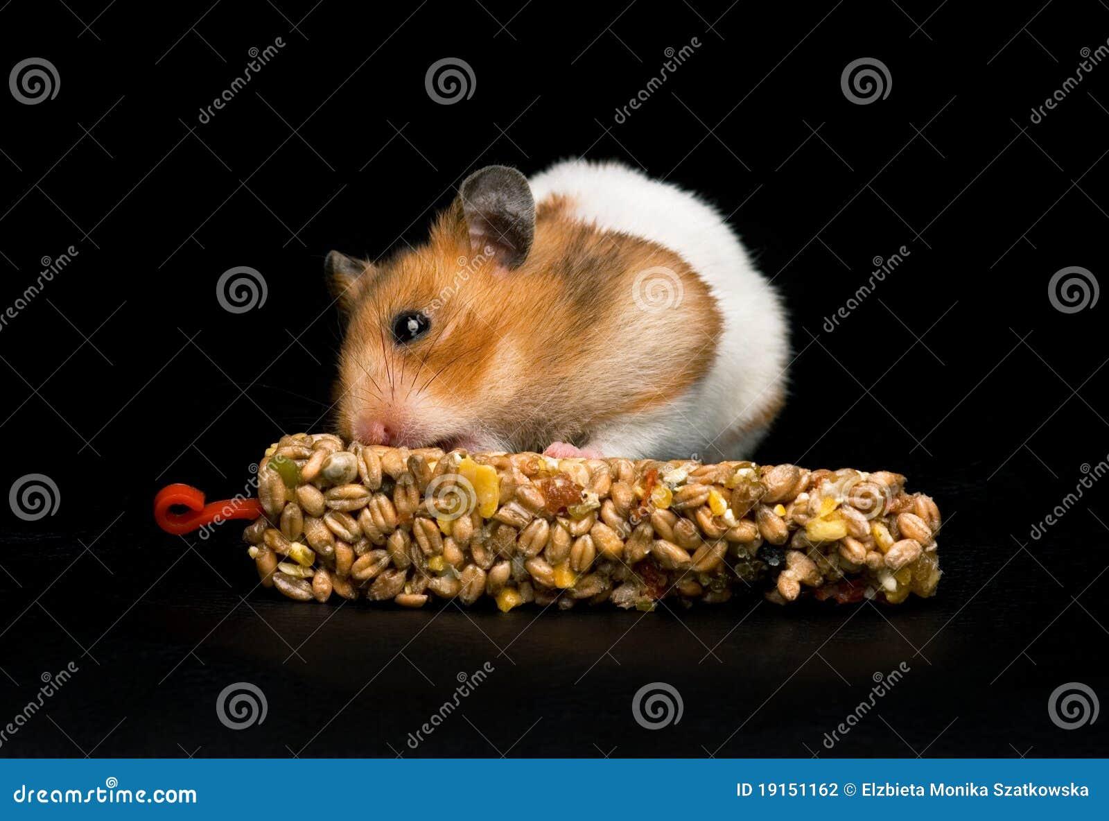 Hamster mangeant le bar de festin