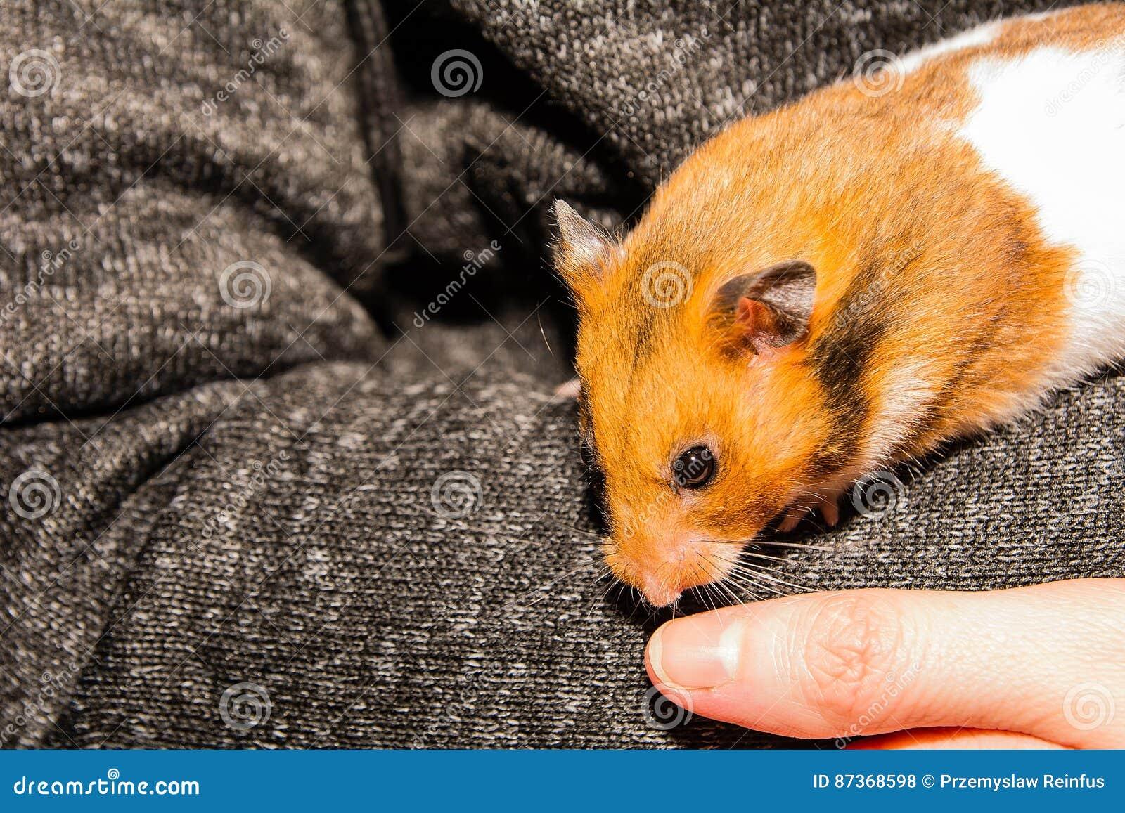 hamster libre po gratuit porno maigre les adolescents