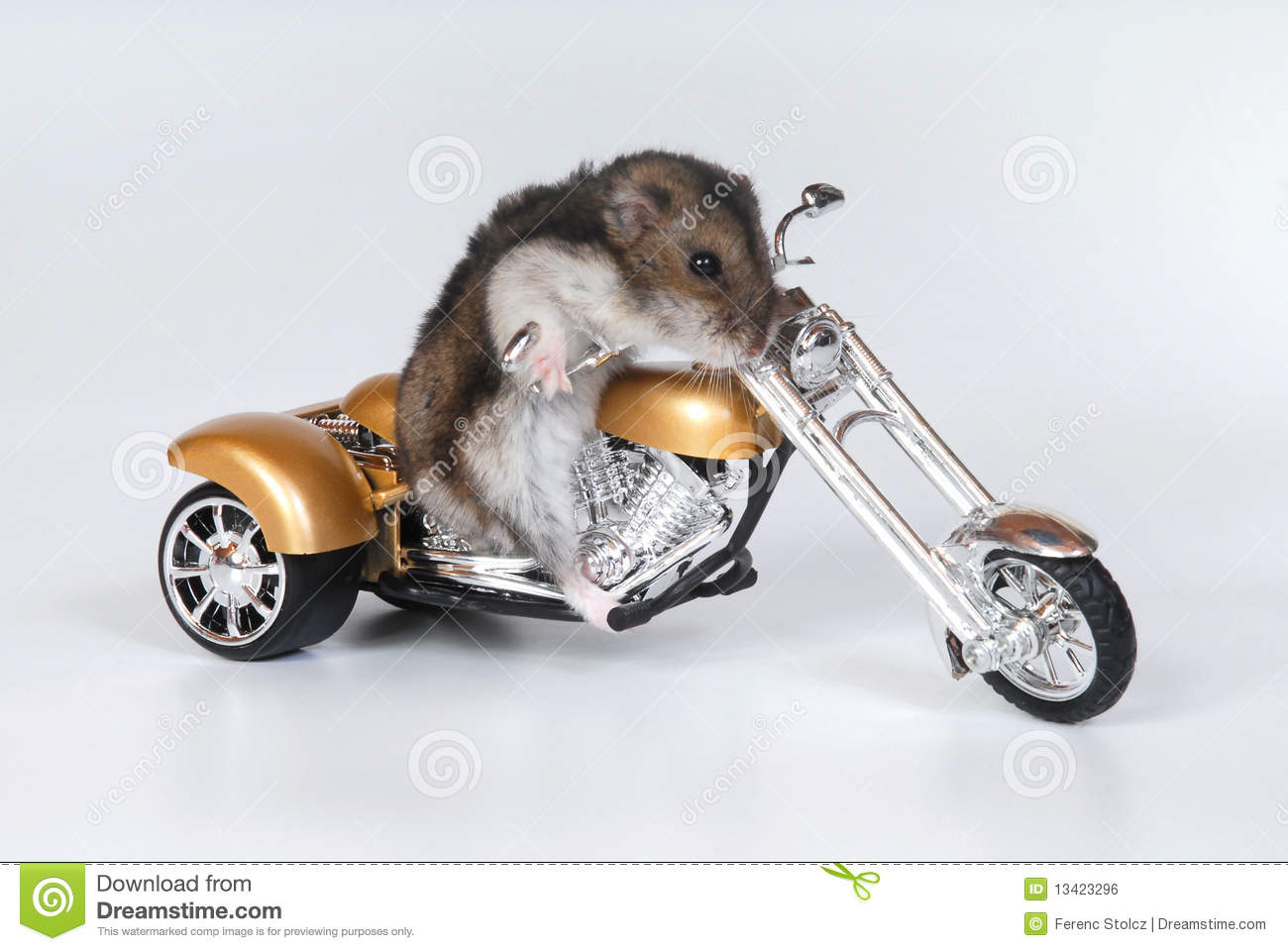 funny image of a hamster riding a toy bike, on white background.