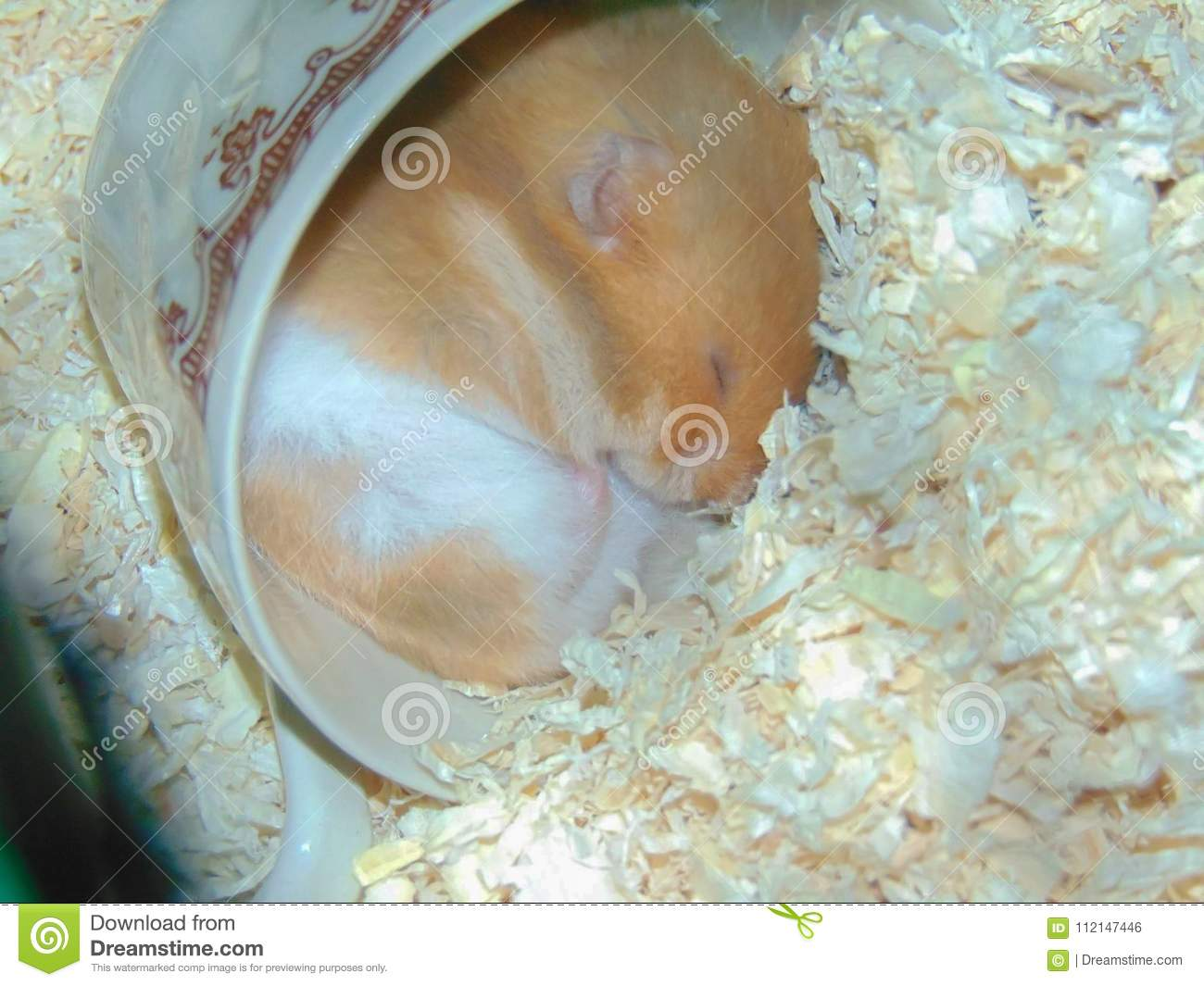 Hamster sleeping in a cup stock photo  Image of coffee