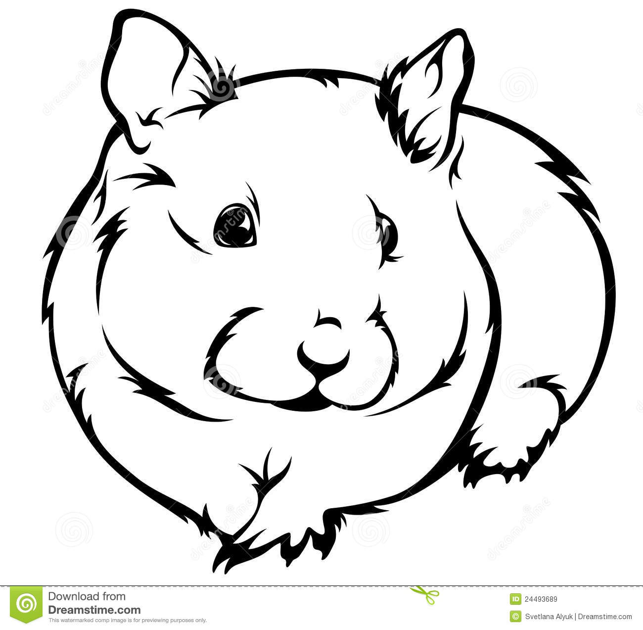 Hamster Vector Royalty Free Stock Images Image 24493689