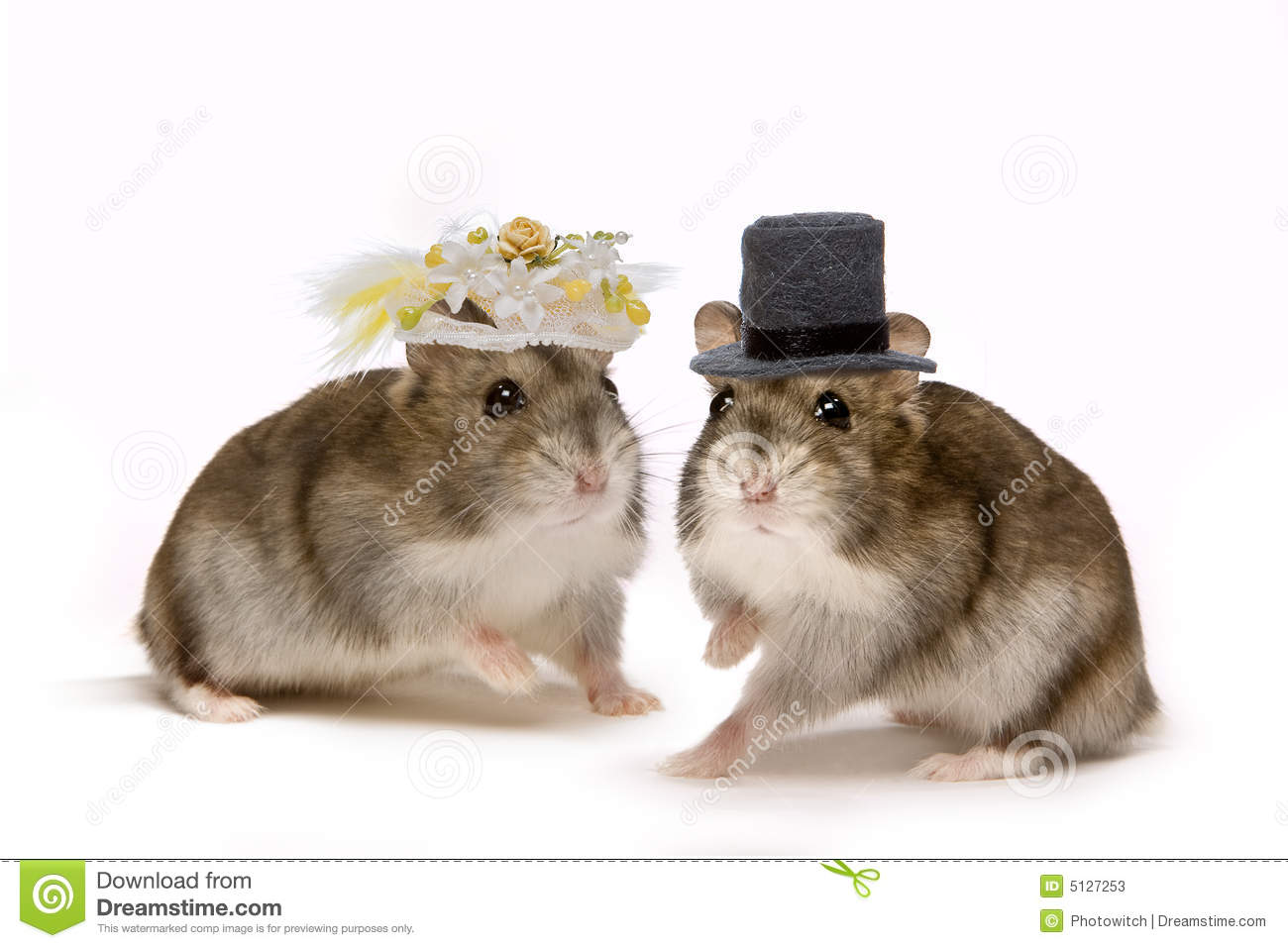 Two little hamsters wearing hats during their wedding ceremony.