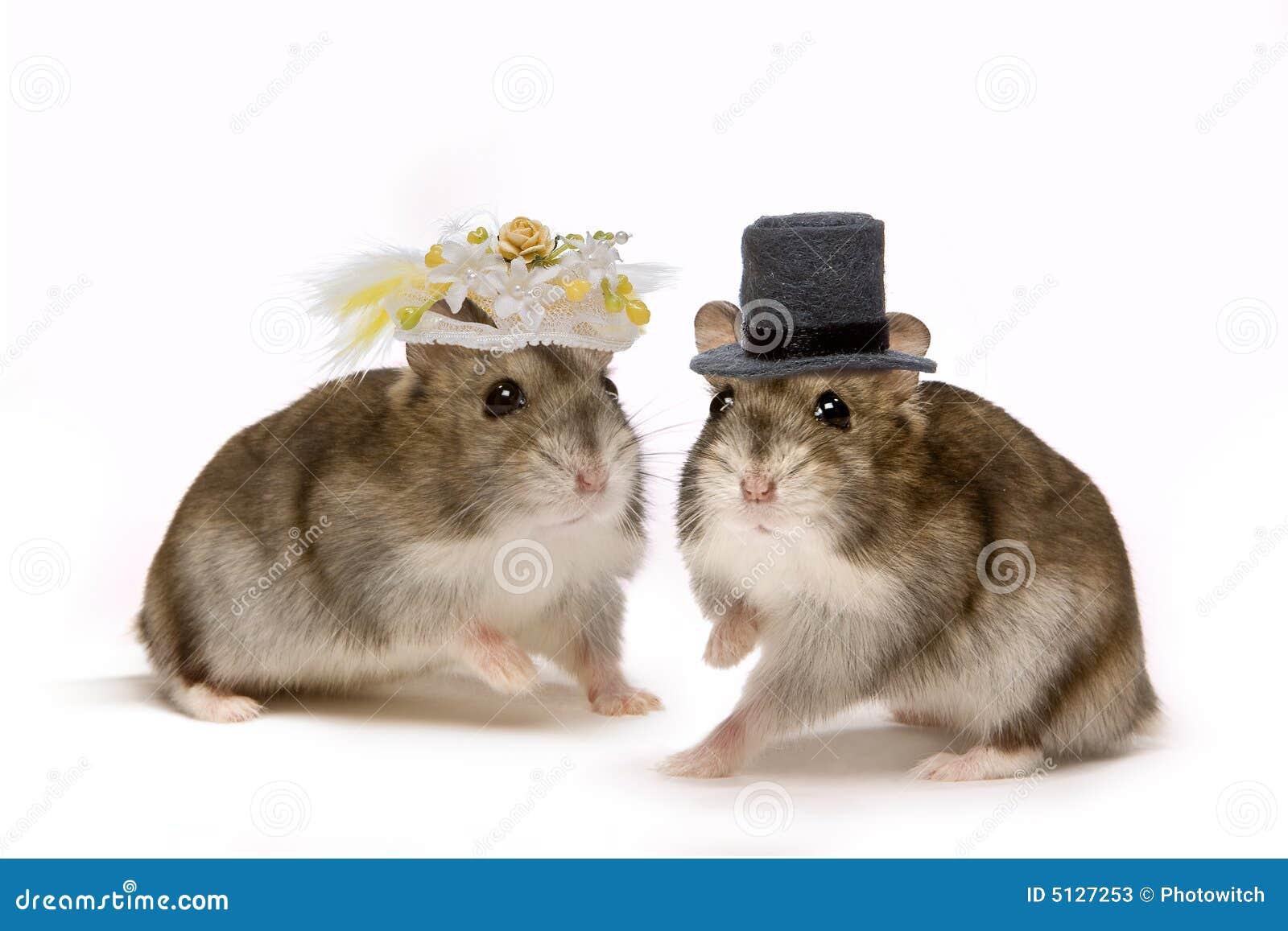 Hamster Wedding Stock Photos Image 5127253