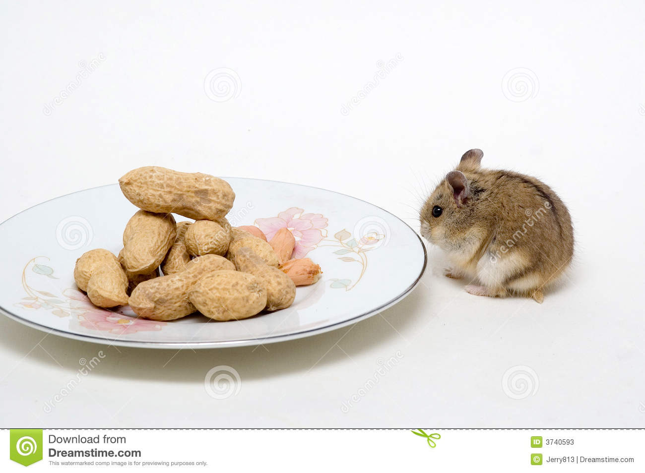 The hamsters eat peanuts