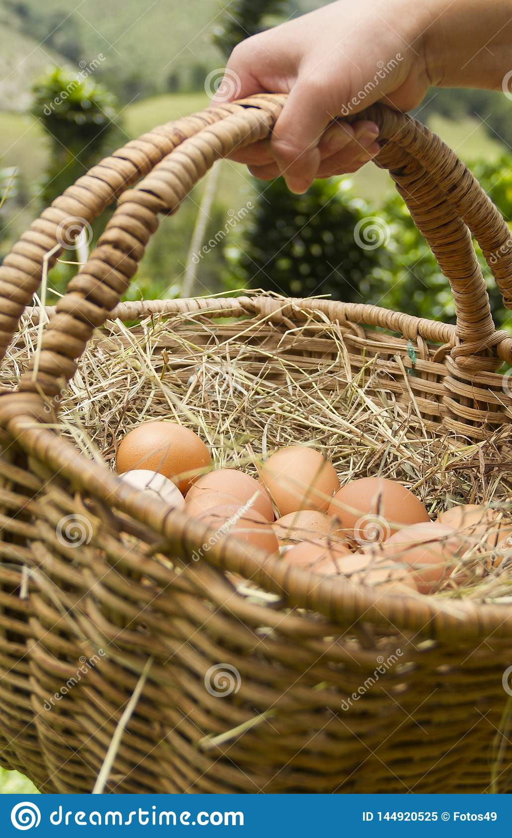 Hand with bascket of fresh eggs green backsground