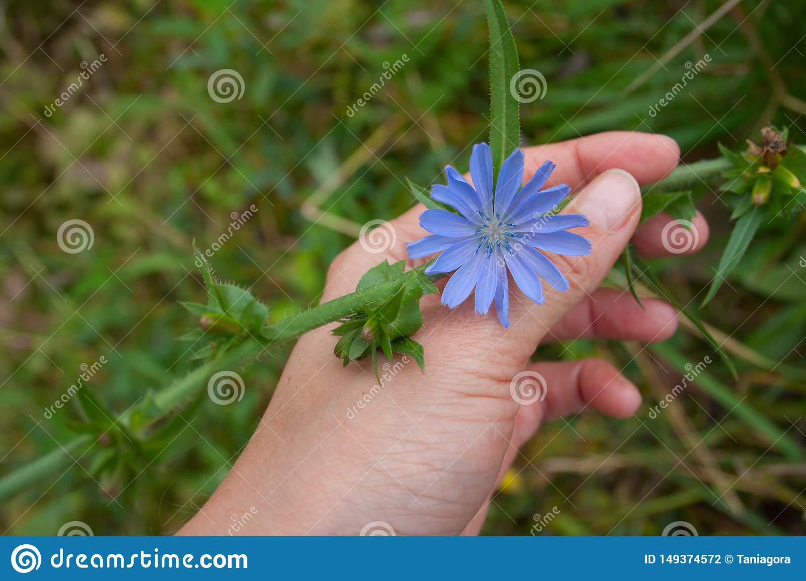 Hand with blue flower on a green background.